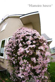 mameiro house090608-2.jpg