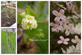 mameirohouse110618-4.jpg