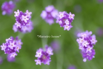 mameirohouse 100717-1.jpg