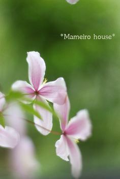 mameiro house090608-1.jpg