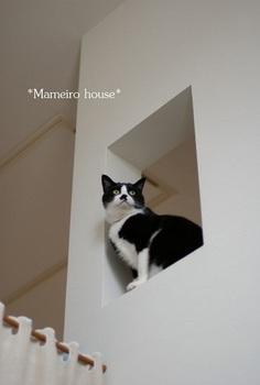 mameirohouse101207-1.jpg