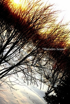 mameirohouse110228-8.jpg