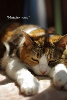 mameirohouse110404-9.jpg
