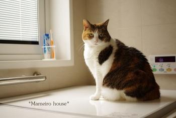 mameirohouse110508-1.jpg