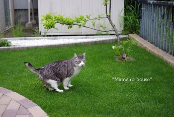 mameirohouse110618-5.jpg