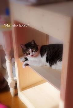maneirohouse120506-6.jpg